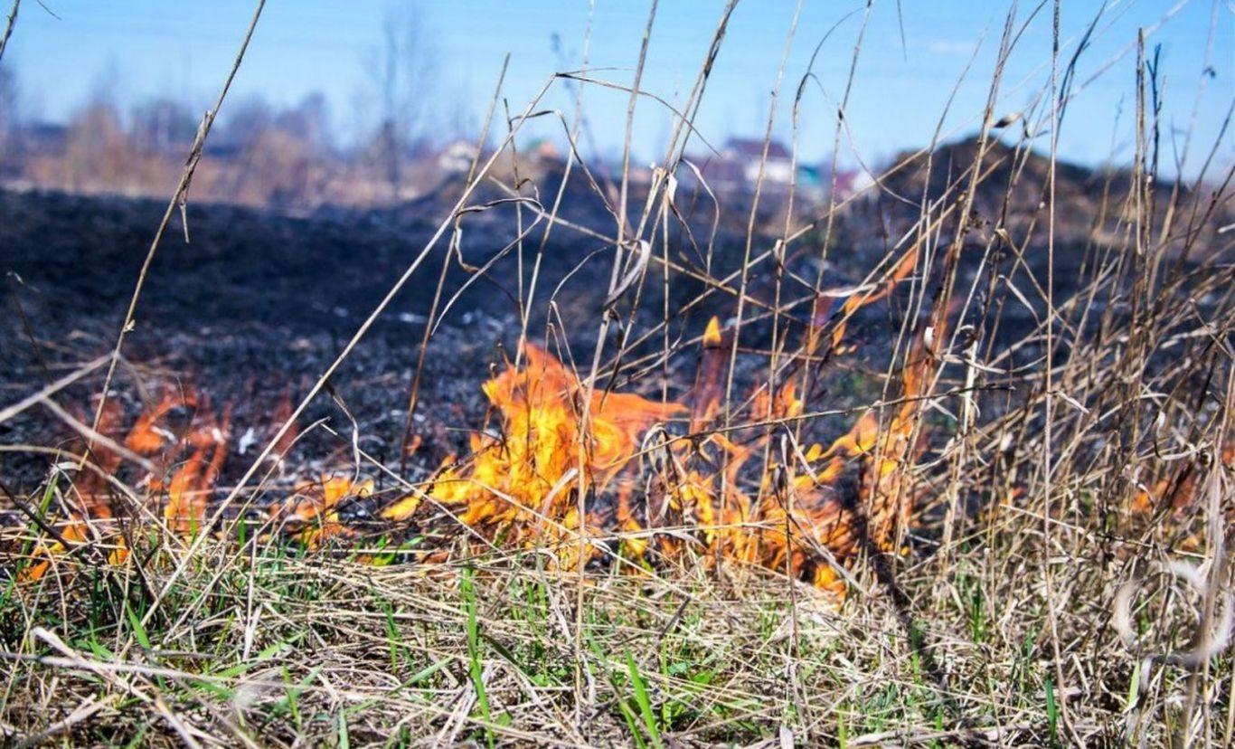 В Тульской области – высокий уровень пожароопасности