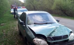 Косуля попала под машину в Малоярославецком районе