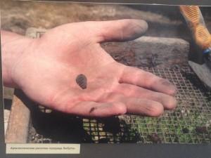 Калужские археологи перевернули представление о вятичах