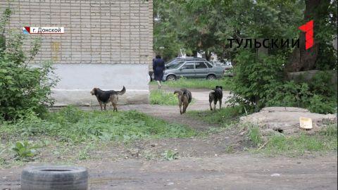 Нападение собак на 6-летнюю девочку в Донском: полная картина событий