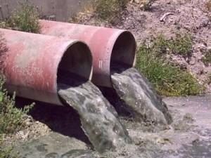Фирма по переработке мясной продукции сливала отходы в реку