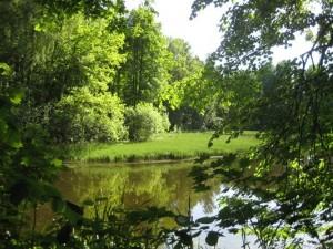 Лесники два года расчищали заповедный парк